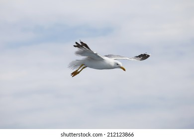 Beautiful seagull soaring in the blue sky