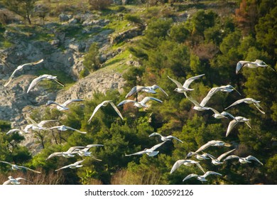Beautiful seagulls fly together in the wild nature