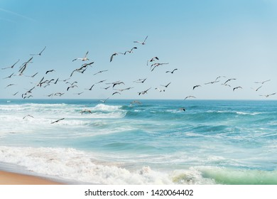 Beautiful Seascape in Blue and Turquoise Colors. Flock of Flying Pelicans over the Sea.