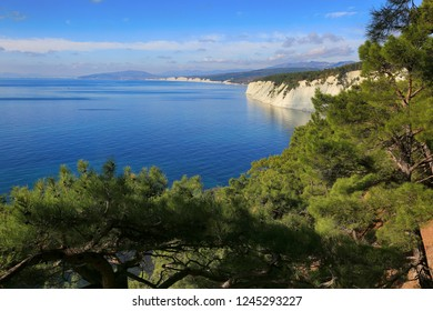 Beautiful seascape and green branches of pines