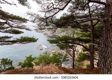 Beautiful seascape with pine trees near peninsula Gamow, Russia, Primorsky krai