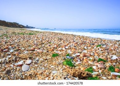beautiful seascape with seashells