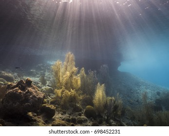Beautiful seascape in shallow water of Caribbean Sea with soft corals and sun beams
