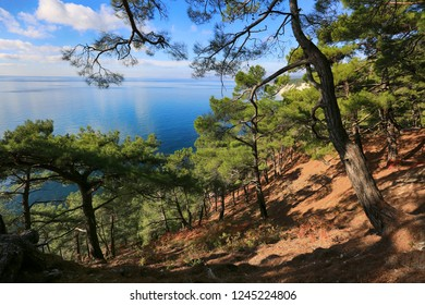 Beautiful seascape through pine green forest