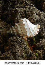 Beautiful seashell among the stones, decoration