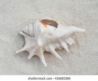 Beautiful seashell on the sand