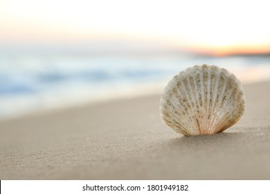 Beautiful seashell on sandy beach at sunrise, closeup. Space for text