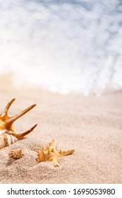 Beautiful seashells lie in the sand on a sunny beach. Blurred sea in the background. Vacation, sea, travel concept. Place for text, close up.