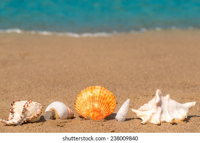 beautiful seashells on the sand lined up macro shot