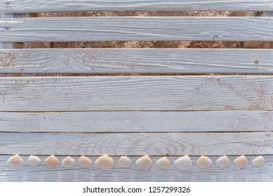 Beautiful seashells and some sand on cracked wooden boards painted in white paint.