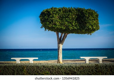 Beautiful seaside in Altea with trees and benches