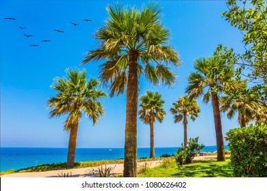 Beautiful seaside resort on a hot summer day. Herbal green lawn and slender palm trees along the sea coast. The concept of health tourism and beach recreation