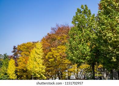 Beautiful seasonal colorful trees and blue sky landscape in autumn style at Kanazawa, Ishikawa, Chubu, Japan