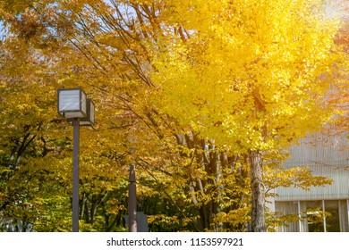 Beautiful seasonal colorful trees with japanese Lamp post and ray sunlight in autumn style at Kanazawa, Ishikawa, Chubu, Japan