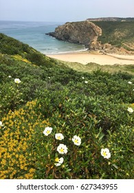 A beautiful secret beach seen from above, the shore full of flora, the coast of Portugal