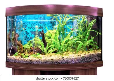 Neon Fish Images, Stock Photos & Vectors | Shutterstock