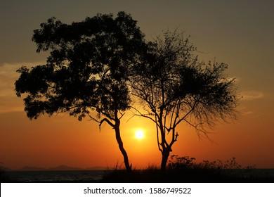 beautiful senset between the tree