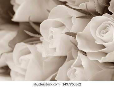 Beautiful sepia toned roses, background