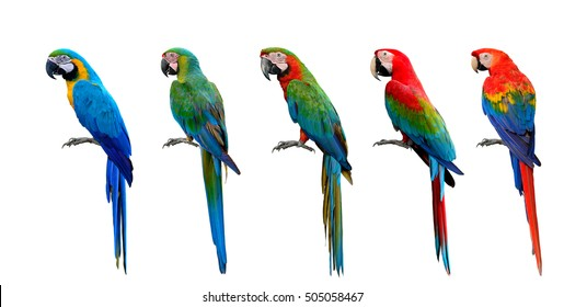 Beautiful set of macaw parrot birds compilation, Scarlet, Green-winged, Harlequin, Buffon and Blue and Gold, exotic parrots collection