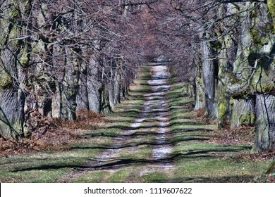 Beautiful shady alley of deciduous trees with a path