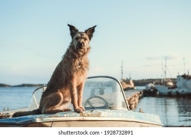 A beautiful shaggy dog sits on a boat against the backdrop of a landscape and a port with ships. Landscape, sky.