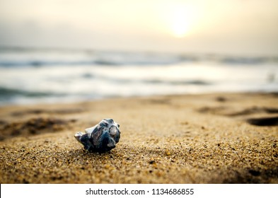 Beautiful shell in the sand on a sunset background.