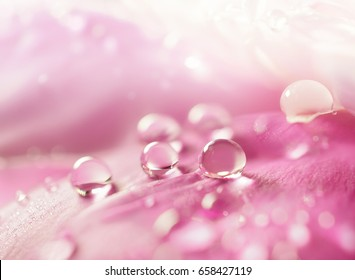 Beautiful shiny water droplets on flower petal peony macro. Drops of dew on a pink petal. Gentle soft elegant airy artistic image with soft focus.