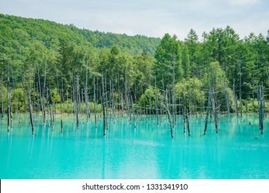 The beautiful Shirogane Blue Pond at Hokkaido, Japan