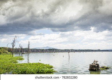 Beautiful shore of Naivasha lake, Kenya, East Africa