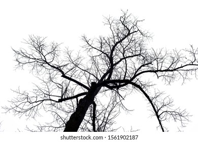 A beautiful shot of a bare tree isolated on a white background - great for a creative wallpaper