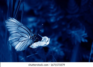 Black And White Butterfly Wallpaper Stock Photos Images Photography Shutterstock