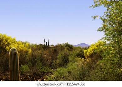A beautiful shot of the desert landscape in Tuscon, Arizona.