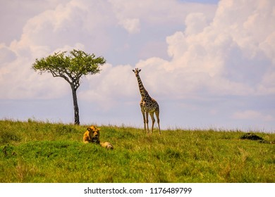 Beautiful shots of giraffes in Africa