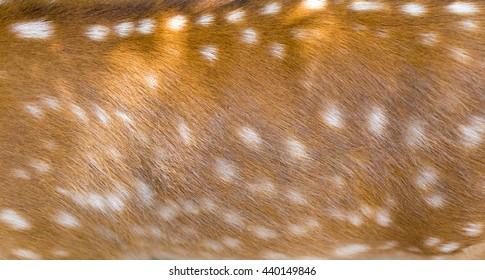 beautiful sika deer fur as background
