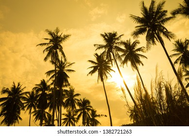 Beautiful silhouette coconut palm tree forest in sunset evening golden sunlight background. Travel tropical summer beach holiday vacation or save the earth, nature environmental concept.