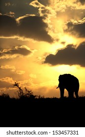A beautiful silhouette of a elephant bull against an amazing African sunset. Taken on safari in South Africa.