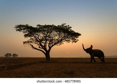 Beautiful silhouette Elephant with mahout relax by walks at sunset.