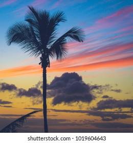 Beautiful silhouette of a palm tree at sunset with dramatic clouds near Makena Beach, Maui, Hawaii