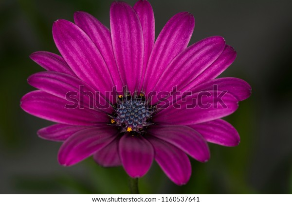 Beautiful Single Flowers Stock Photo (Edit Now) 1160537641