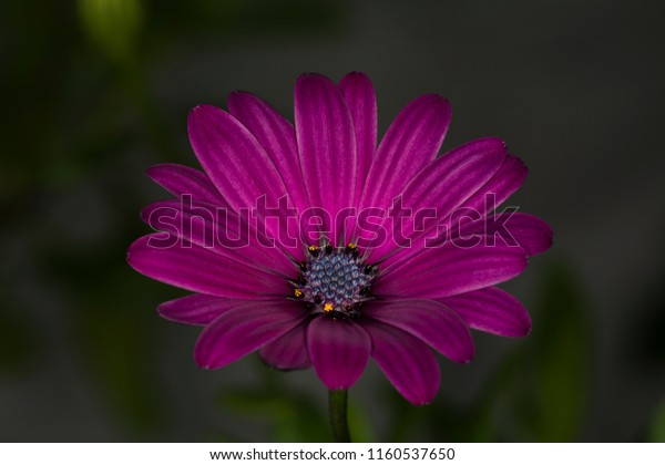 Beautiful Single Flowers Stock Photo (Edit Now) 1160537650