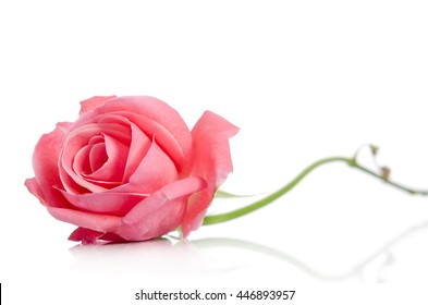 single pink rose images stock photos vectors shutterstock