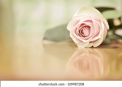 A Beautiful Single Pink Rose with a Shallow Depth of Field (DOF) Lying on a Wooden Table with a Reflection underneath, with room for Text on the left