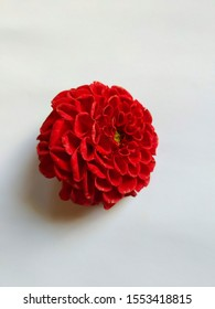 Beautiful single red color Dahlia flower isolated in a white background