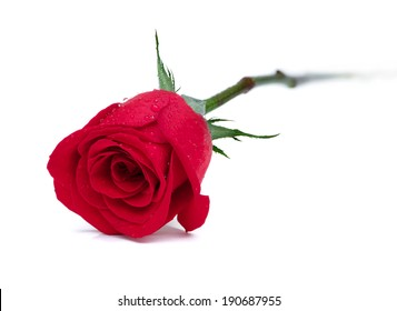 Beautiful single Red Rose...