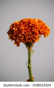 Beautiful single vivid orange Cellosia flower on the grey wall background, close up view - Shutterstock ID 1938313324