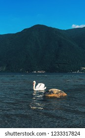 Beautiful single white swan swimming in the lake of Lugano on a beautiful Swiss alps background and blue sky in Lugano, Switzerland.