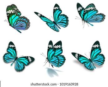 Schöner sechsmonatiger Schmetterling einzeln auf weißem Hintergrund
