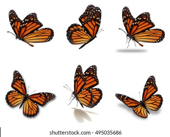 Beautiful Six monarch butterflies set, isolated on white background