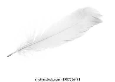 Beautiful sketching white feather on white background
