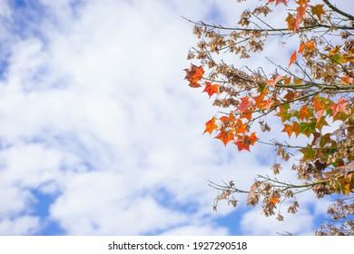 Beautiful sky. Autumn trees. Nice day